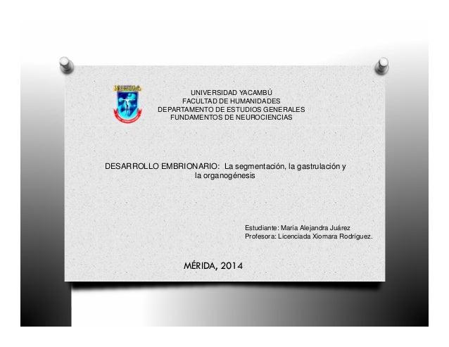 UNIVERSIDAD YACAMBÚ  FACULTAD DE HUMANIDADES  DEPARTAMENTO DE ESTUDIOS GENERALES  FUNDAMENTOS DE NEUROCIENCIAS  DESARROLLO...