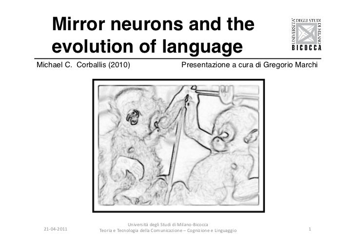 Marchi   mirror neurons and evolution of language