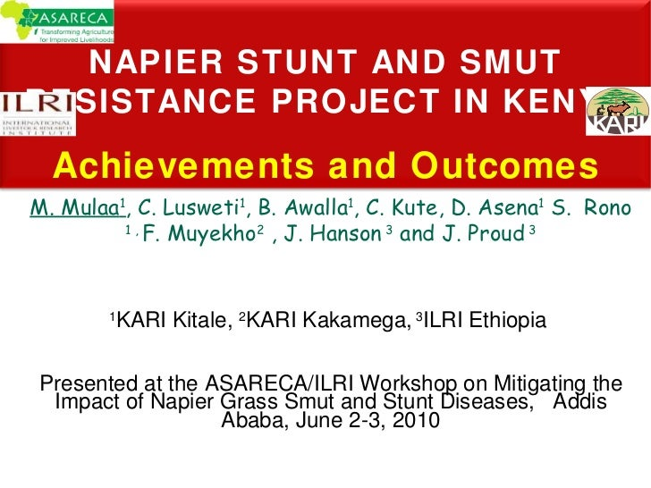 Napier Stunt and Smut Resistance Project in Kenya: achievements and outcomes