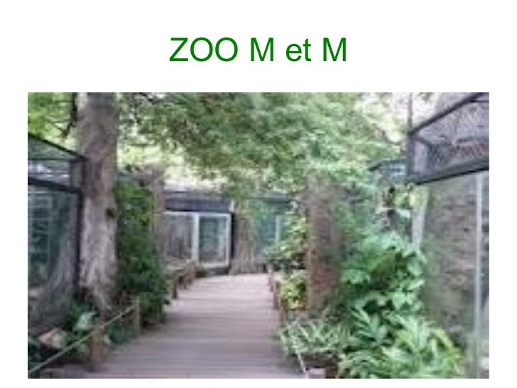 ZOO M et M