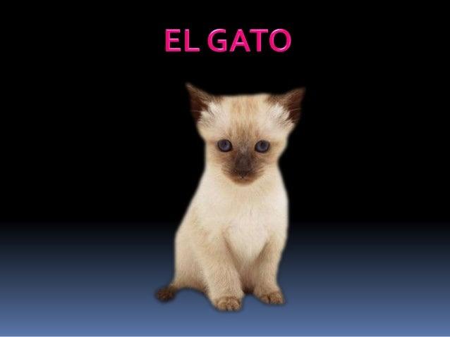 El gato es un pequeño mamífero de la gran familia de los félidos. Como animal de compañía es una de las mascotas más popul...