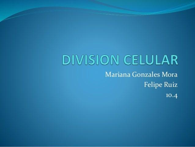 Mariana Gonzales Mora Felipe Ruiz 10.4