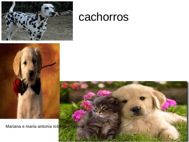 cachorros  Mariana e maria antonia roberta e helena