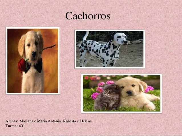 Cachorros  Alunas: Mariana e Maria Antonia, Roberta e Helena  Turma: 401