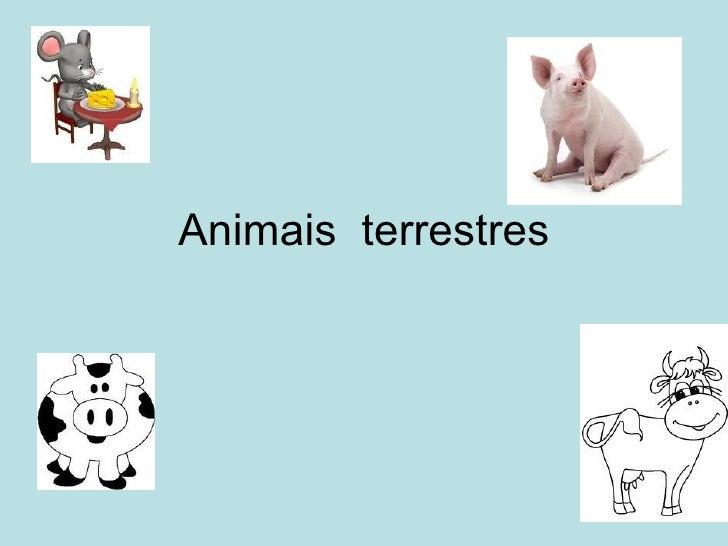 Animais  terrestres