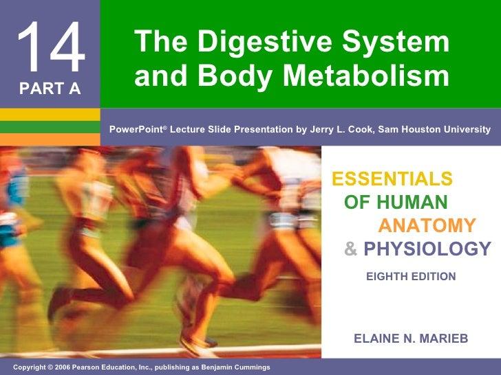 The Digestive System Pt. 1