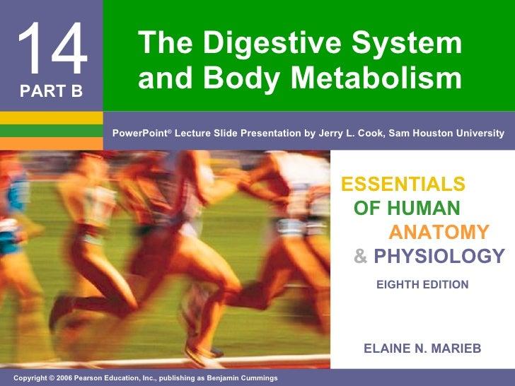 The Digestive System Pt. 2