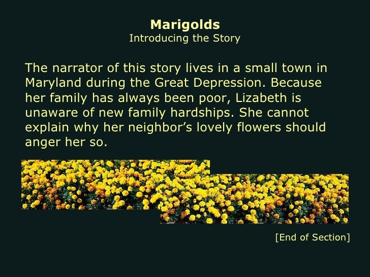 marigolds paragraph Short paragraph on flower flower is a modified shoot with condensed axis called thalamus and cultivated flowers are carnation, aster, clendula, petunia, pansy, nasturtium, phlox, zinnia, marigold etc some other flowers usually grown in gardens are antirrhinum, portulaca, chrysanthemum.