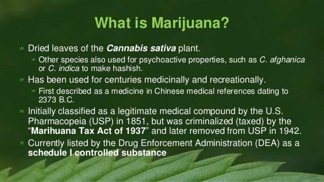 Does Cannabis Cause Psychosis  HERB  Cannabis News