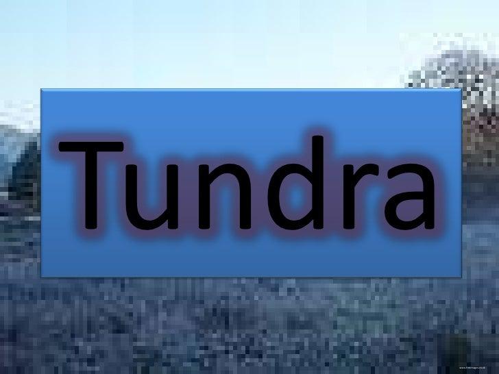 Tundra         www.freeimages.co.uk