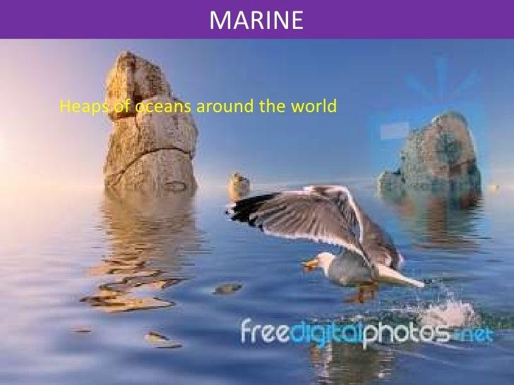 MARINEHeaps of oceans around the world