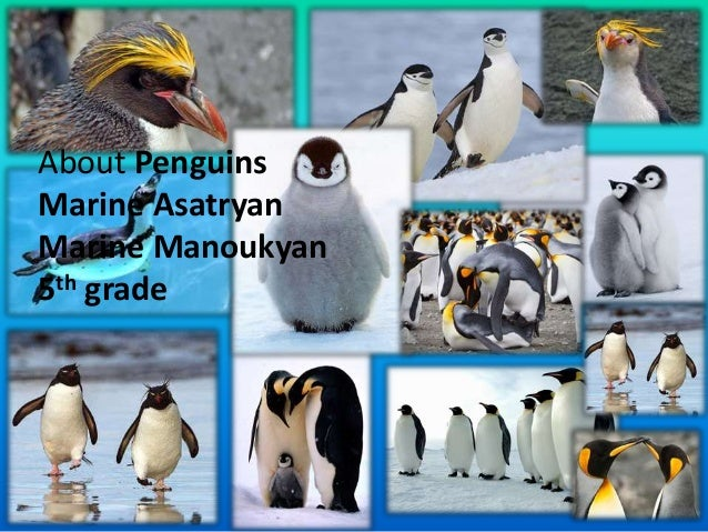 About Penguins Marine Asatryan Marine Manoukyan 5th grade