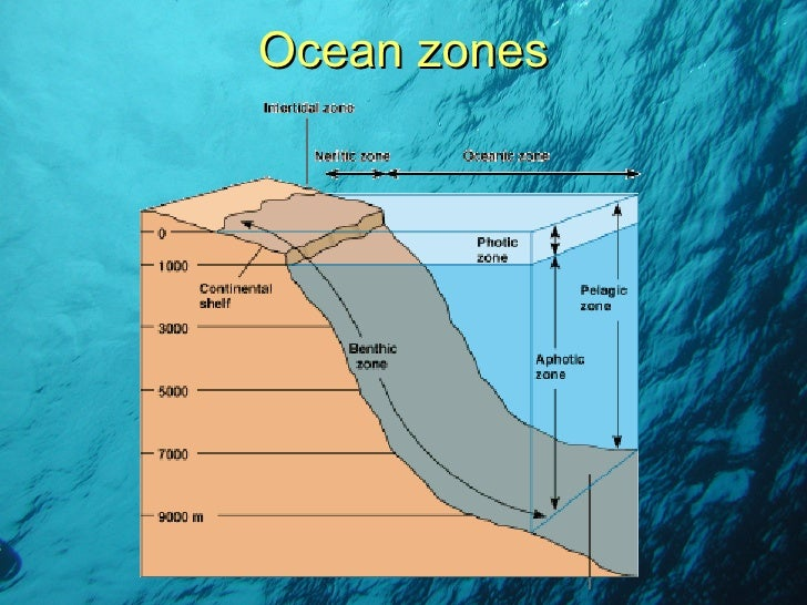 marine ecosystem information