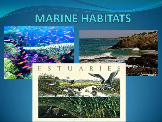 What is a habitat? an environment that has all necessary requirements for an organism to live.