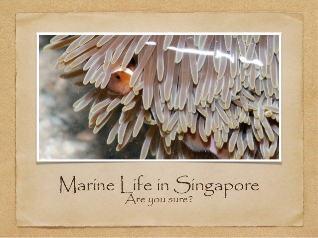 Marine Life in Singapore (East and NE)