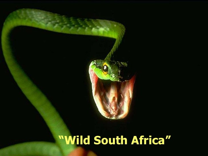 """Wild South Africa"""
