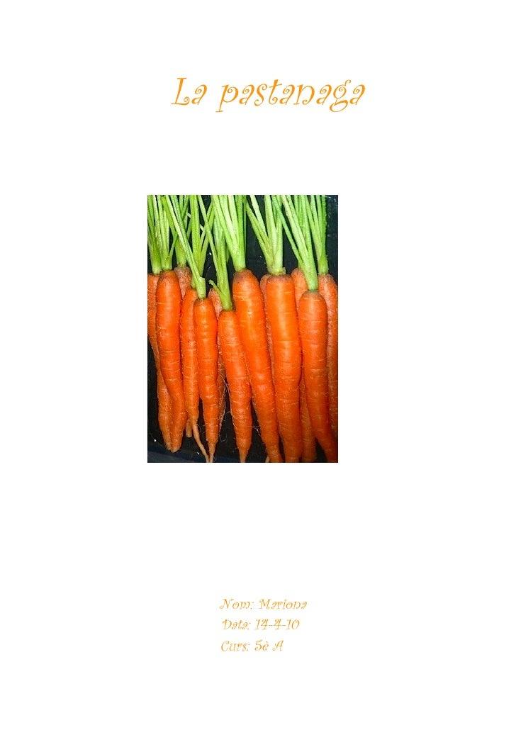 La pastanaga        Nom: Mariona    Data: 14-4-10    Curs: 5è A