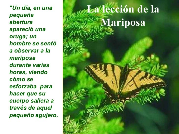 "La lección de la Mariposa ""Un día, en una  pequeña abertura apareció una oruga; un hombre se sentó a observar a la ma..."