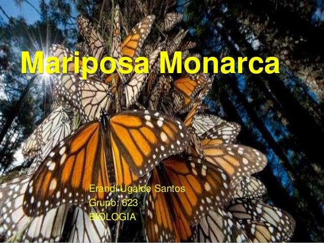 Mariposa Monarca Erandi Ugalde Santos Grupo: 623 BIOLOGIA