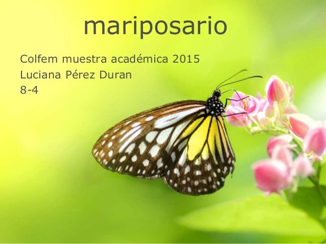 mariposario Colfem muestra académica 2015 Luciana Pérez Duran 8-4