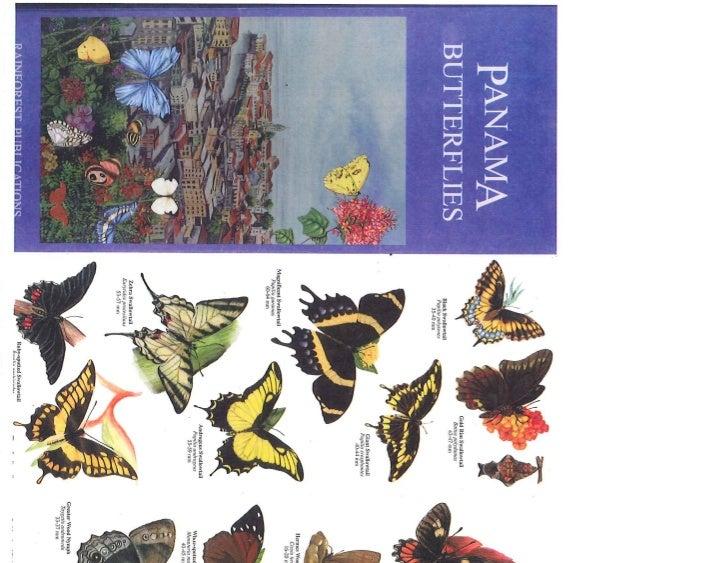 Mariposas de Panamá