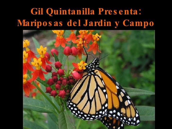 Gil Quintanilla Presenta: Mariposas del Jardin y Campo