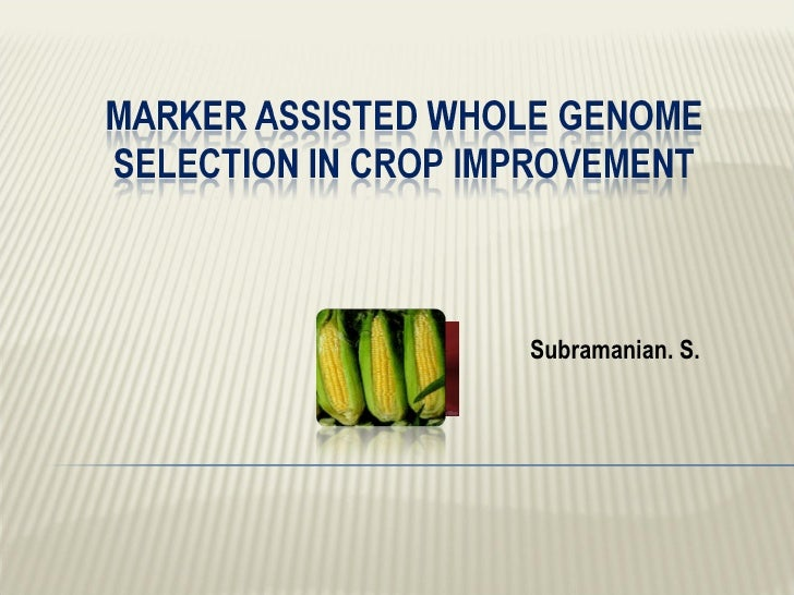 Marker assisted whole genome     selection in crop improvement