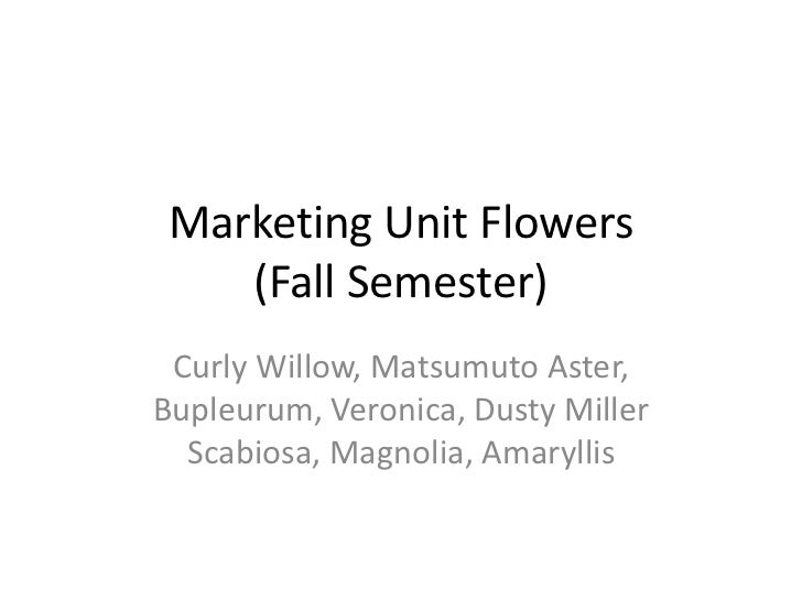 Marketing Unit Flowers    (Fall Semester) Curly Willow, Matsumuto Aster,Bupleurum, Veronica, Dusty Miller  Scabiosa, Magno...