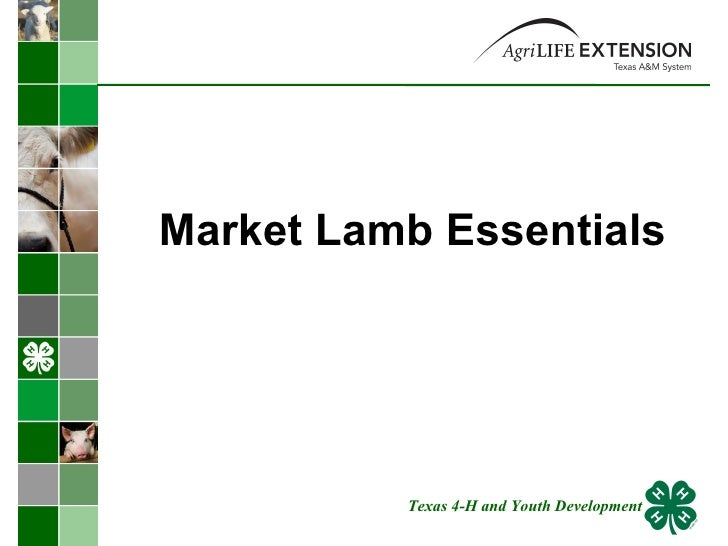 Market Lamb Essentials Texas 4-H and Youth Development