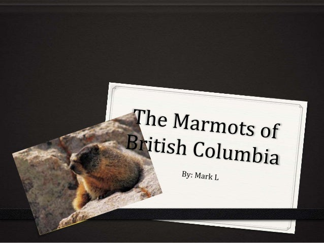 Introduction 0 I chose to do my first P3 on marmots because when I was at my cabin on Shuswap Lake, my family and I drove ...