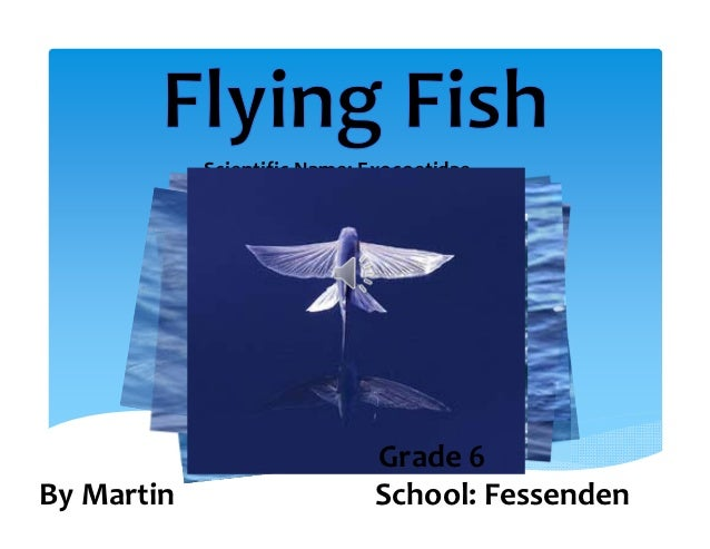 Scientific Name: Exocoetidae                             Grade 6 By Martin                    School: Fessenden