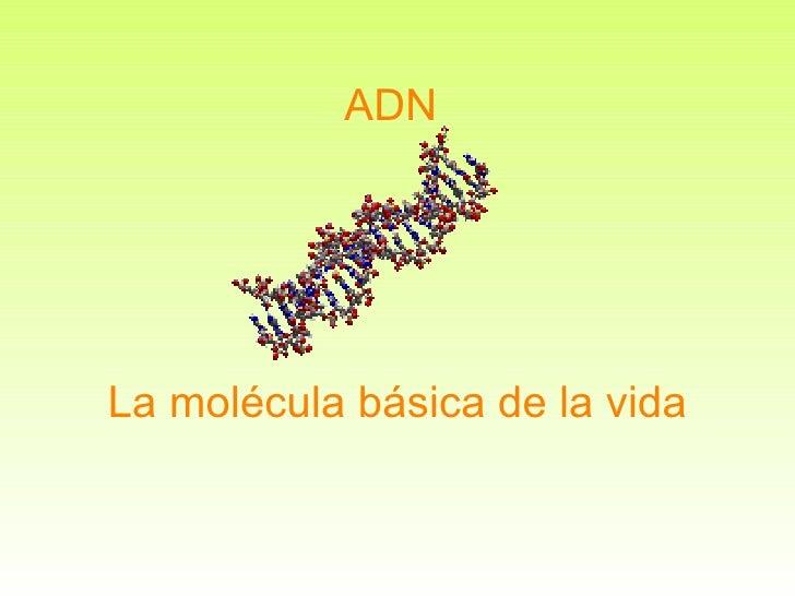 ADN La molécula básica de la vida