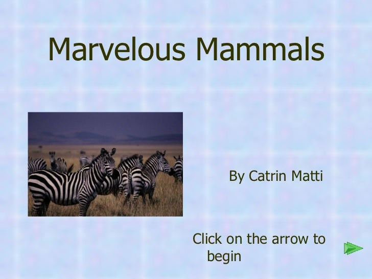 Marvelous Mammals <ul><li>By Catrin Matti </li></ul><ul><li>Click on the arrow to begin </li></ul>
