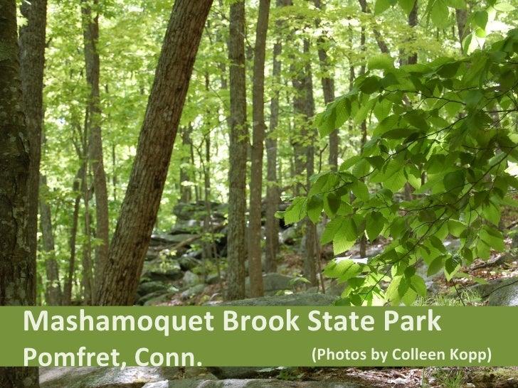 Mashamoquet Brook State Park  Pomfret, Conn. (Photos by Colleen Kopp)