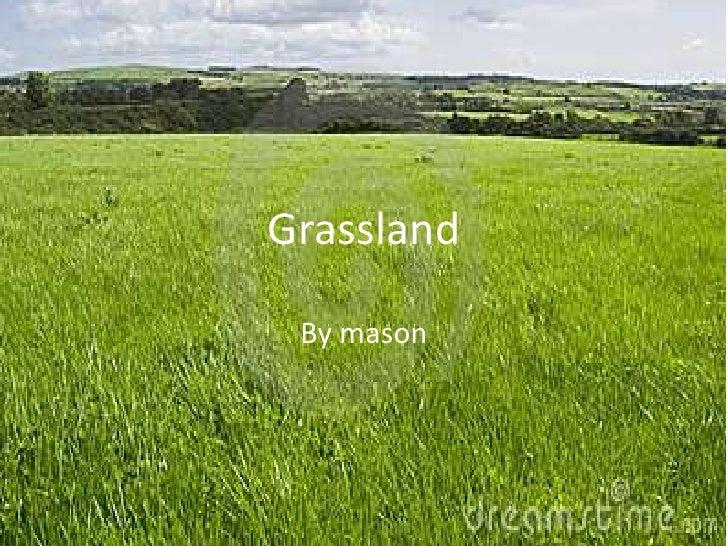 Grassland By mason