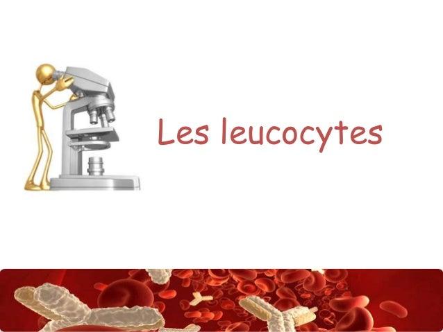Les leucocytes  Abdsalah