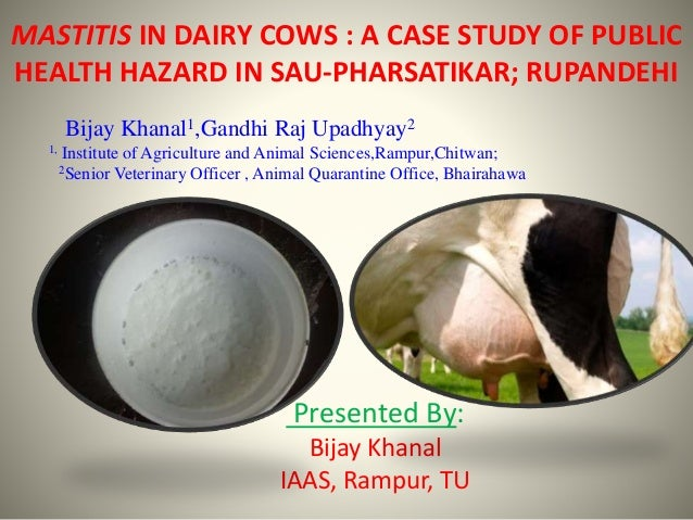Mastitis in dairy cows  a case study of public health hazard in Sau Pharsatikar; Rupandehi, by Bijay Khanal