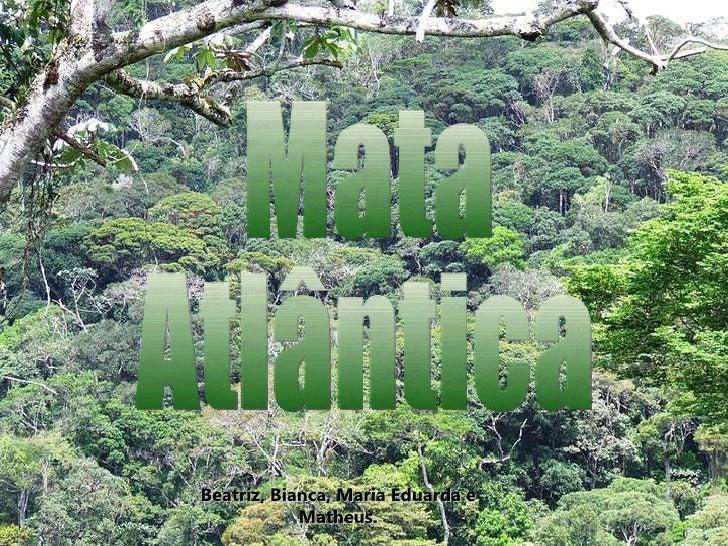 Mata Atlântica - Biomas