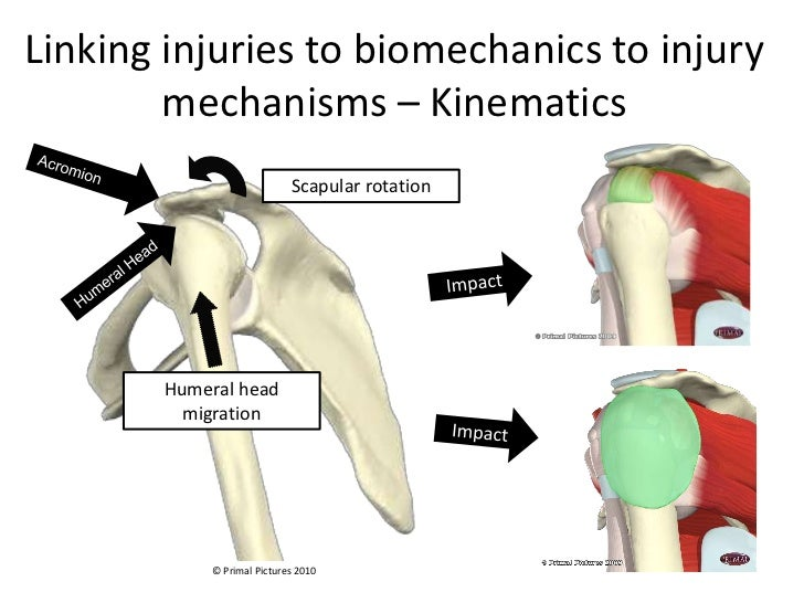 biomechanics of the shoulder Anatomy & biomechanics of the shoulder james j irrgang, phd, pt, atc department of physical therapy university of pittsburgh shoulder motion combined movements.