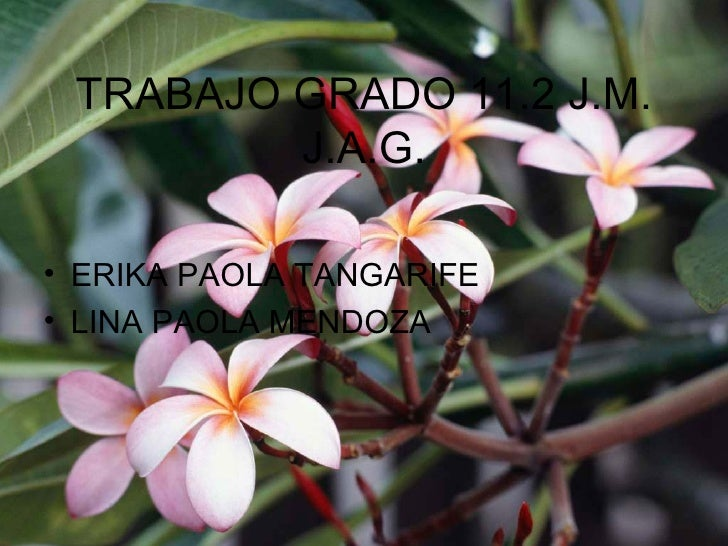 TRABAJO GRADO 11.2 J.M. J.A.G. <ul><li>ERIKA PAOLA TANGARIFE </li></ul><ul><li>LINA PAOLA MENDOZA </li></ul>