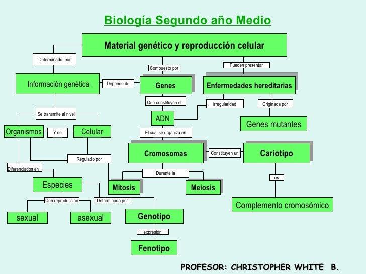 Material genético y reproducción celular Biología Segundo año Medio Determinado  por Información genética Se transmite al ...