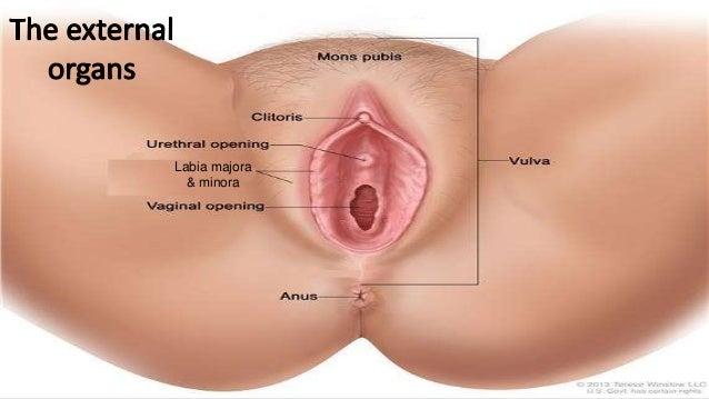 fat women clitoris pictures