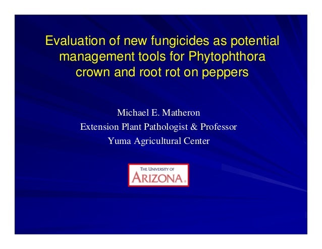 Evaluation of new fungicides as potential management tools for Phytophthora crown and root rot on peppers Michael E. Mathe...