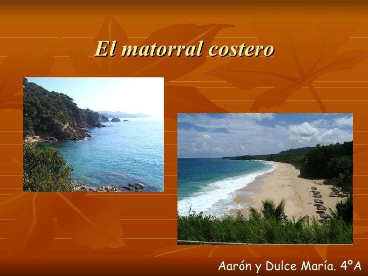 El matorral costero  Aarón y Dulce María. 4ºA