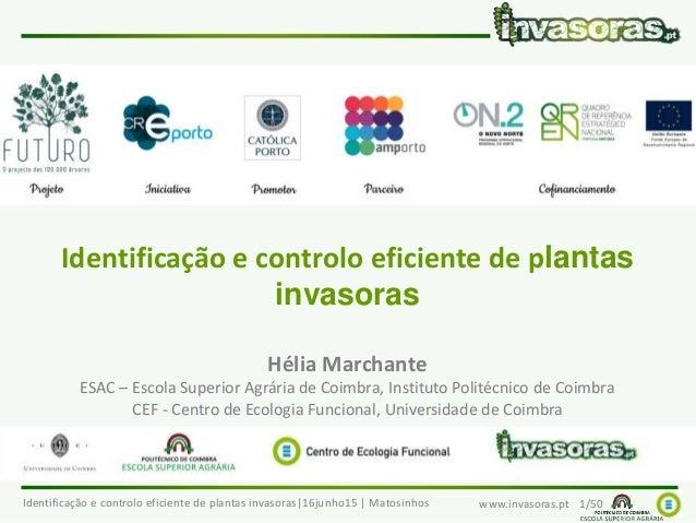 Identificação e controlo eficiente de plantas invasoras 16junho15   Matosinhos www.invasoras.pt 1/50 Identificação e contr...