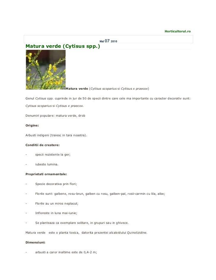 Matura verde