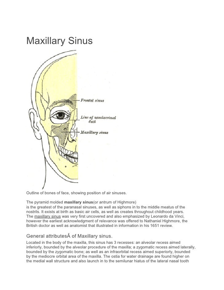 Maxillary SinusOutline of bones of face, showing position of air sinuses.The pyramid molded maxillary sinus(or antrum of H...