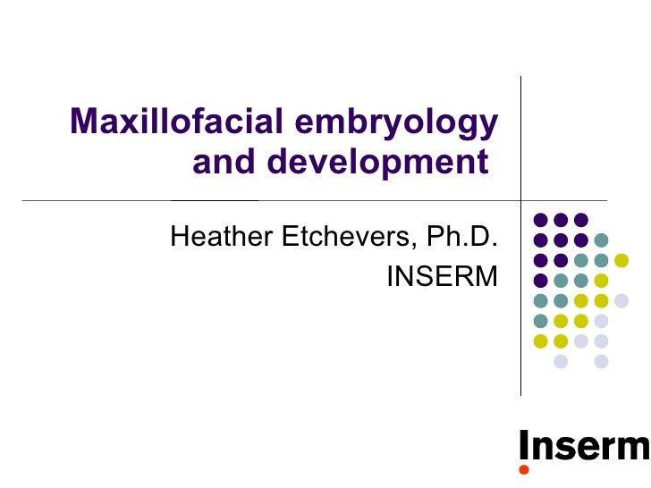 Maxillofacial embryology and development  Heather Etchevers, Ph.D. INSERM