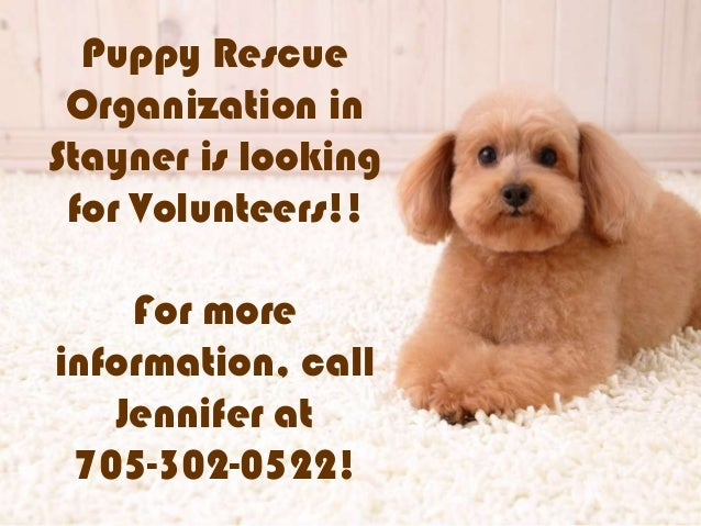 Puppy RescueOrganization inStayner is lookingfor Volunteers!!For moreinformation, callJennifer at705-302-0522!