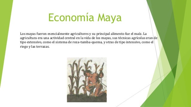 Economía Maya Los mayas fueron esencialmente agricultores y su principal alimento fue el maíz. La agricultura era una acti...
